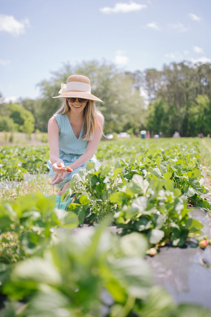 Strawberry Picking at Bugby