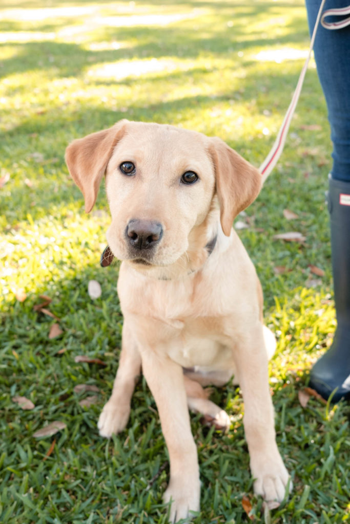The best dog friendly parks in Charleston | Rhyme & Reason