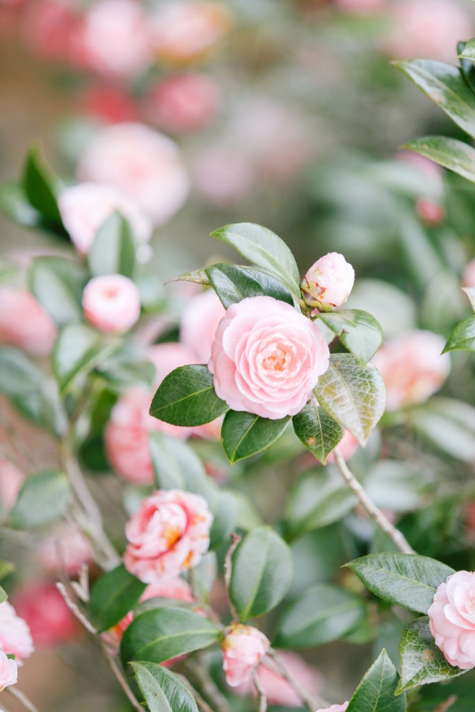 The best parks in Charleston for blooming flowers | Rhyme & Reason